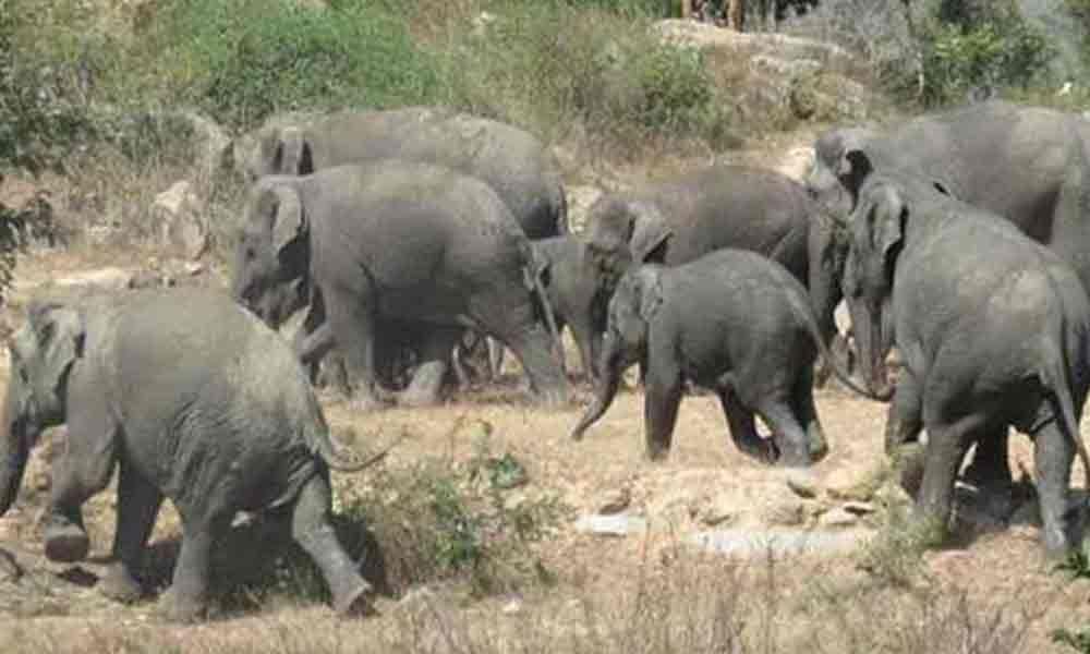 Wild elephant kills two women in Sitampeta agency
