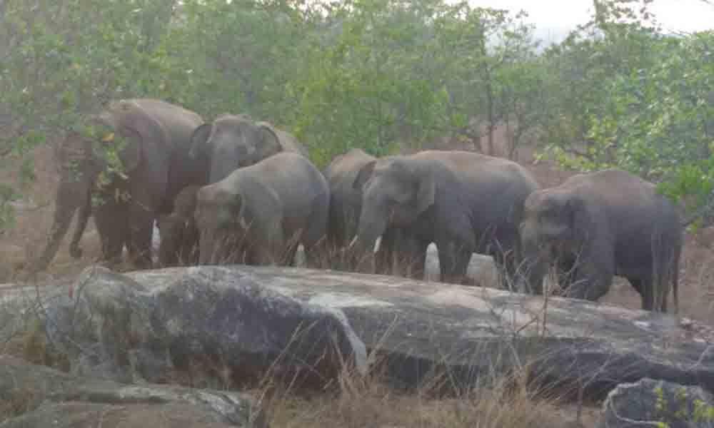 Srikakulam: Wild elephants kill dozen persons in 12 years