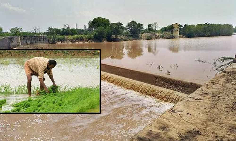 Rains occurring with influence of monsoons brings cheers to the farmers in Kadapa district