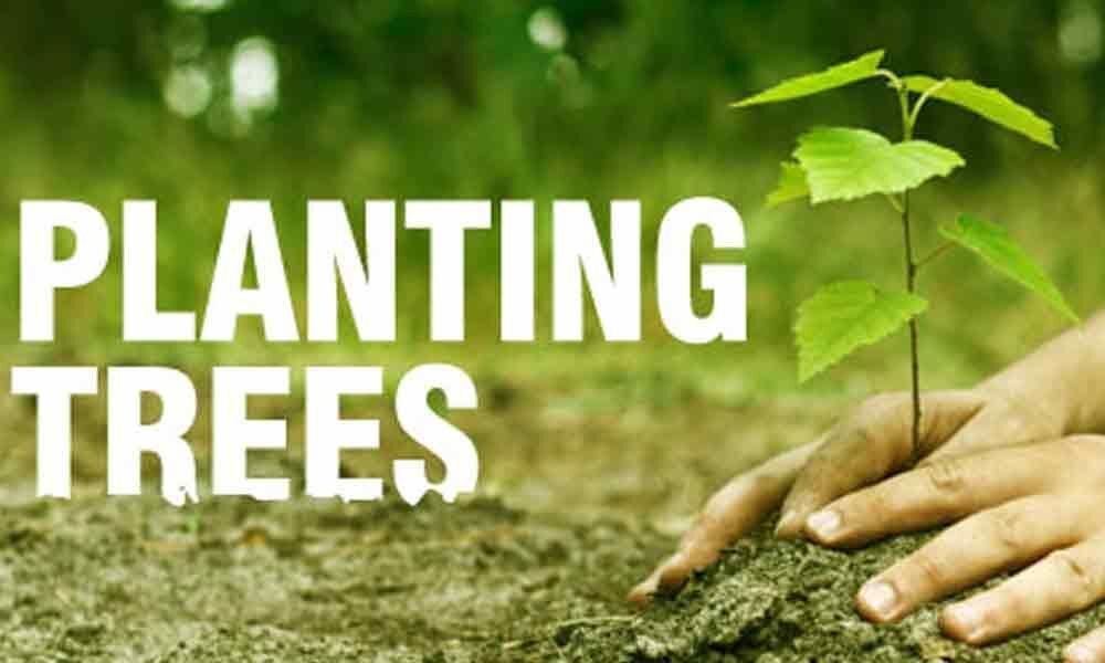 Planting trees can play a significant role in controlling pace of climate change