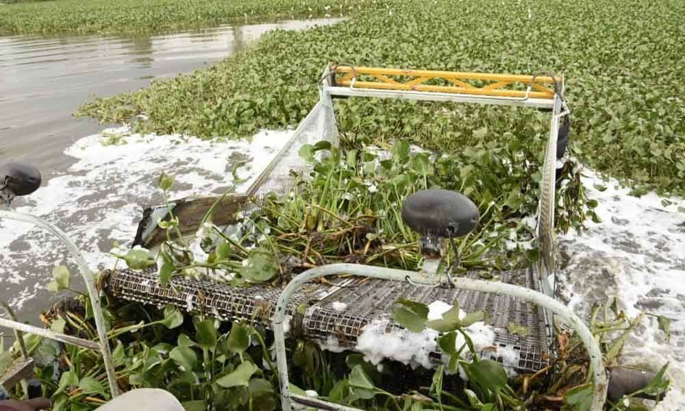 GHMC acts, begins works to remove water hyacinth