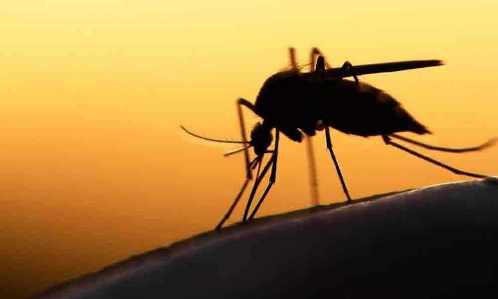 Eradicating mosquitoes becomes easy with this breakthrough technique