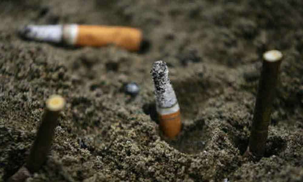 Cigarette butts can hamper plant growth: Study