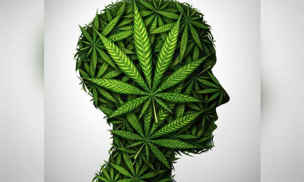 Does Weed kill cells of the brain?