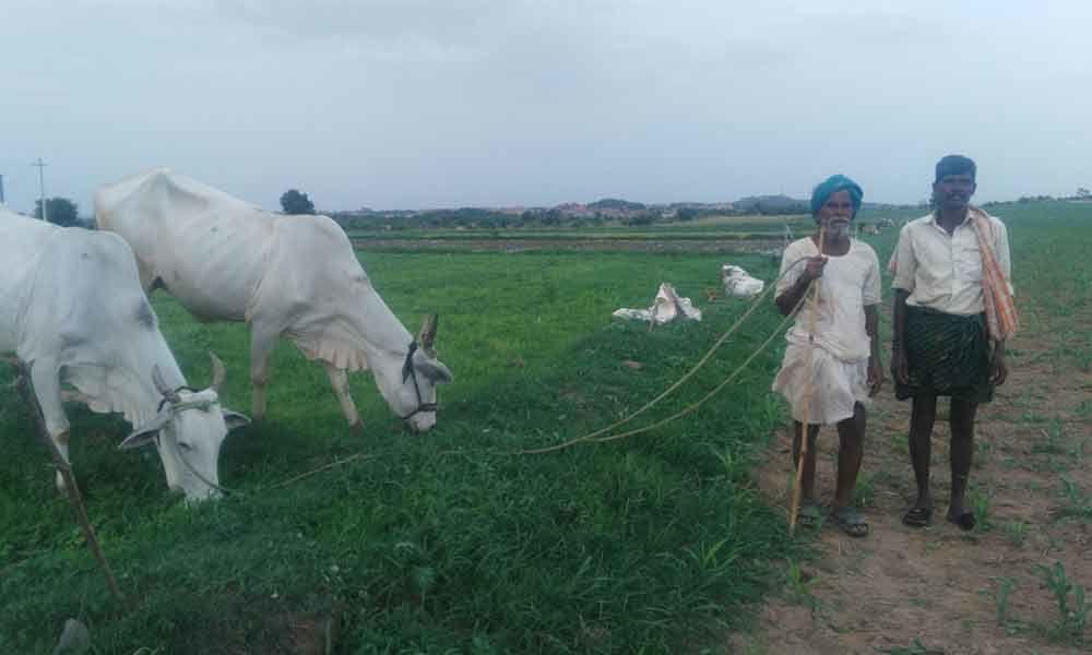 Rythu Bandhu slows down migration from Palamur