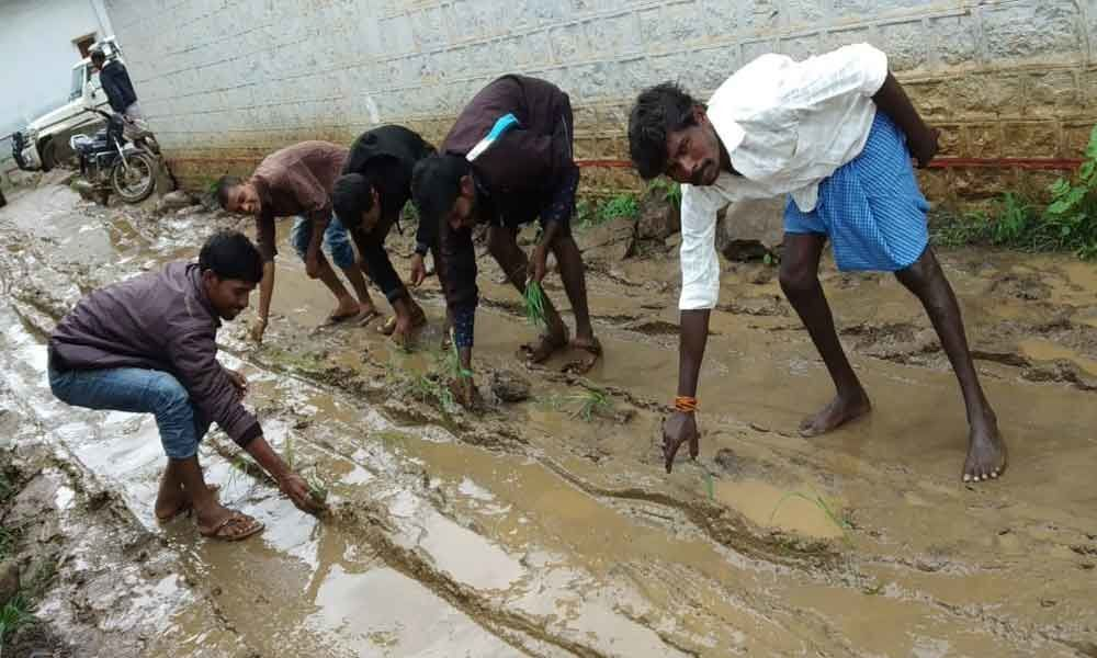 Paddy sowed on muddy roads in protest