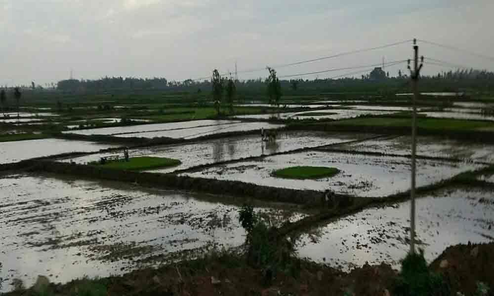 Kharif operations hit by deficit rainfall in Srikakulam