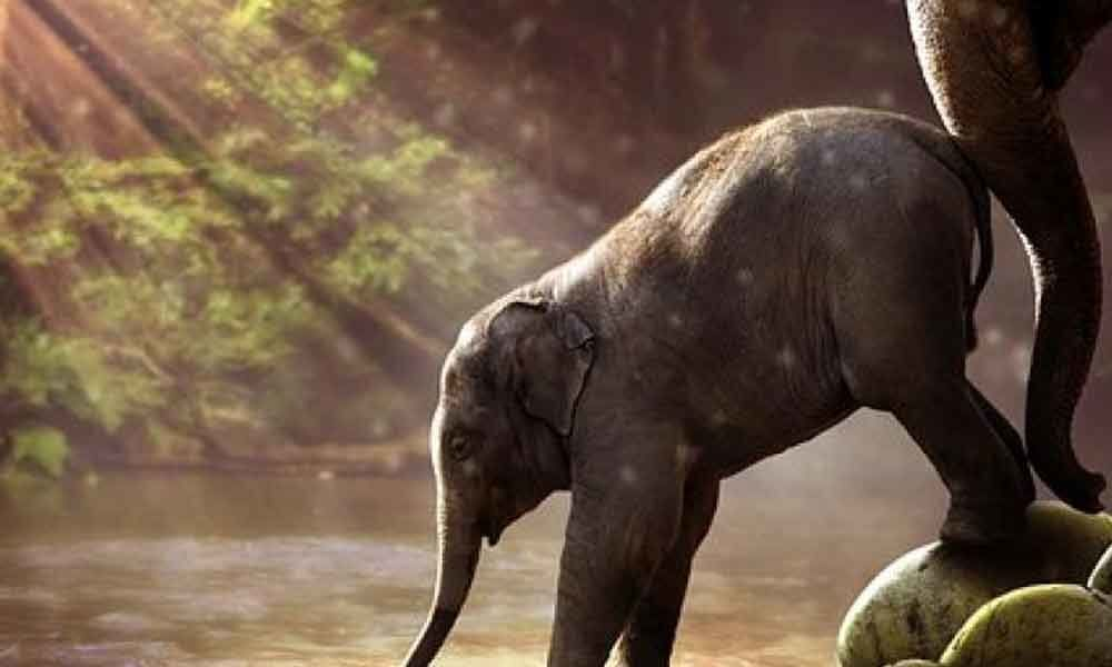 Forest elephants shape environment by serving as seed dispensers