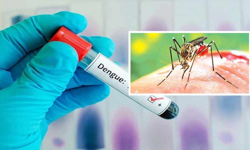 47 dead, over 200,000 infected with dengue in Sri Lanka