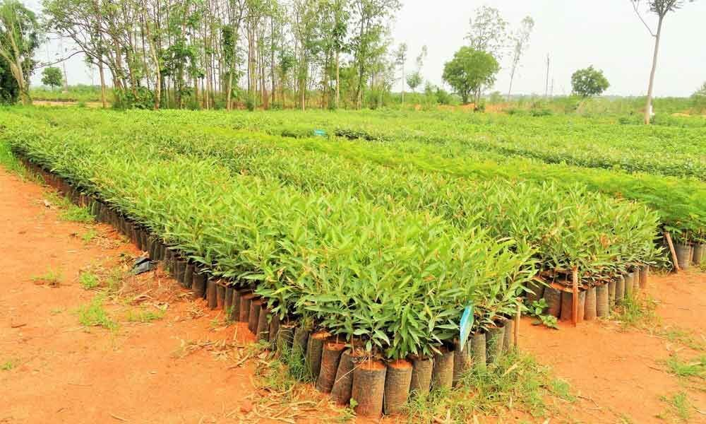 TSFD pitches for boosting green cover in State