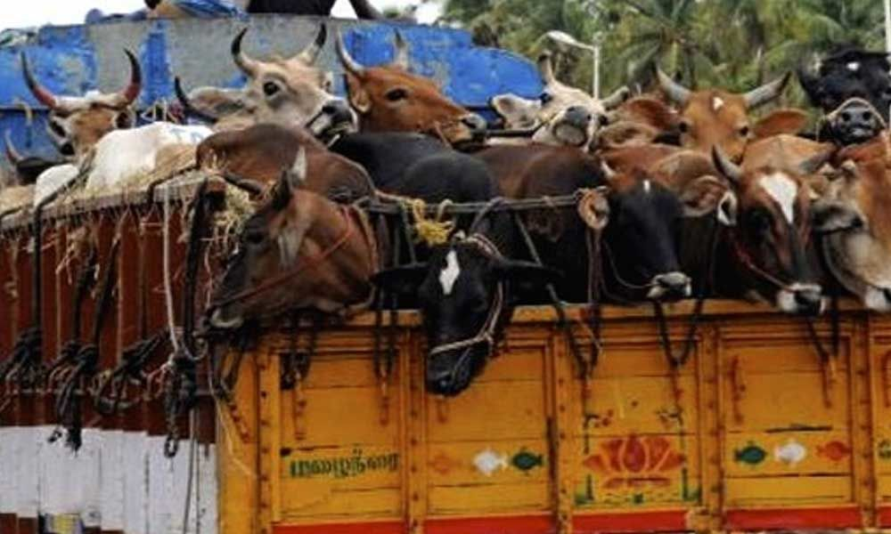 Two youngsters took into custody for attacking others in illegal transportation of cows