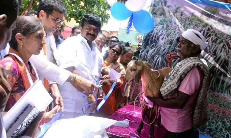 Warangal: Fish seedlings released in water bodies