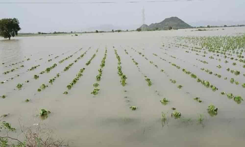 Agriculture crops inundated in 5,285 hectares in Guntur dist