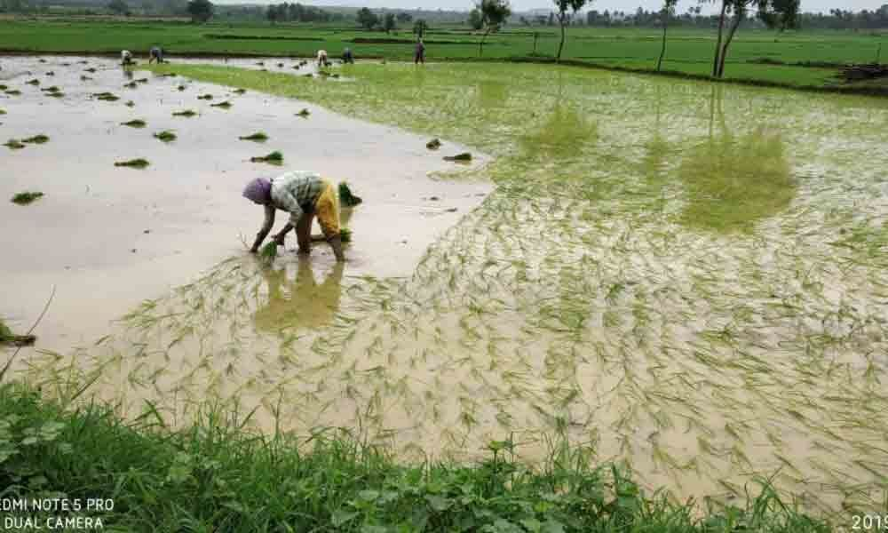76% land under farming post ample rains in Kothagudem