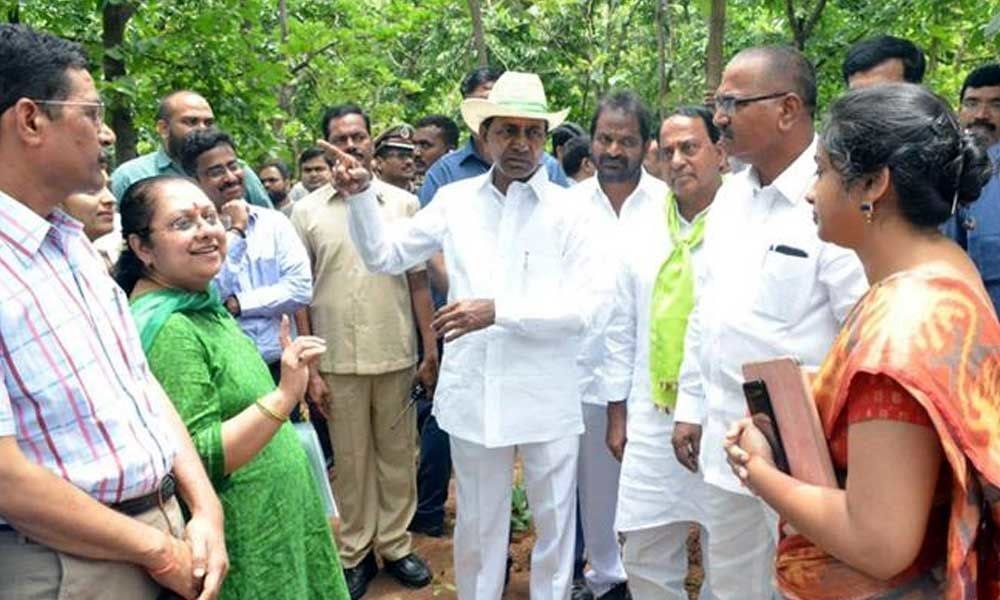 KCR asks collectors to chalk out plan for forest restoration across state