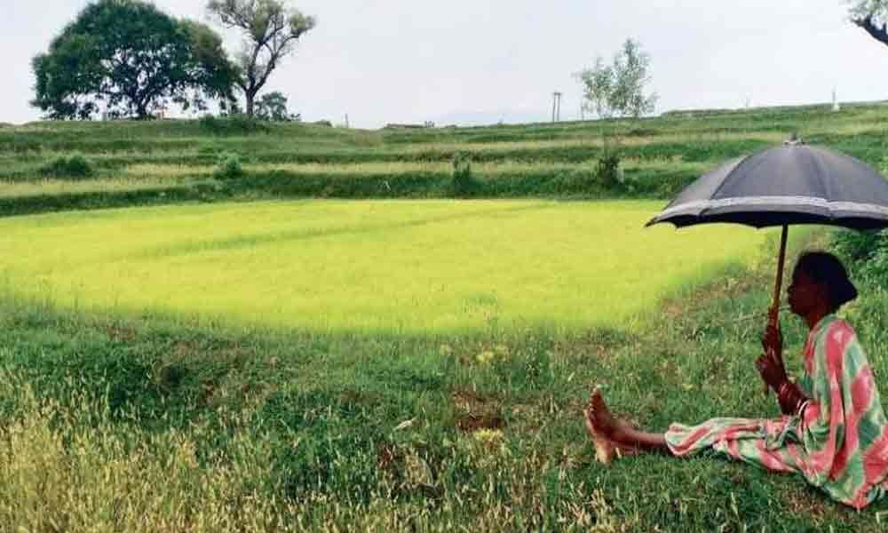 Recent rains bring new hopes to farmers in Kadapa district