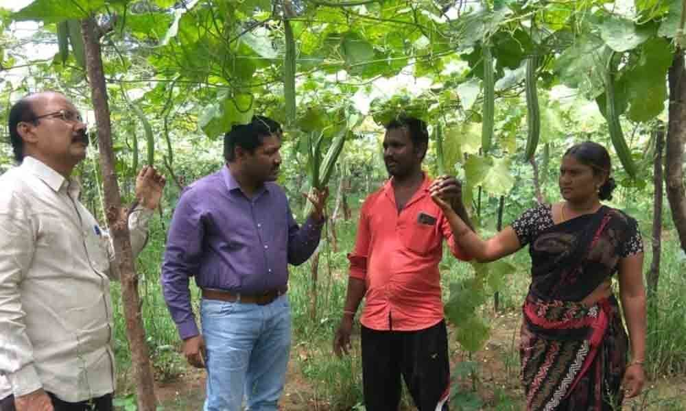 District Horticulture Officer inspects ridge gourd cultivation in Kothagudem