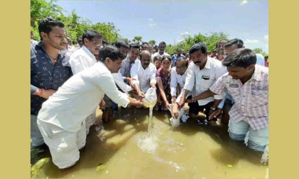 Nalgonda: Fishlings released into Duginelly pond