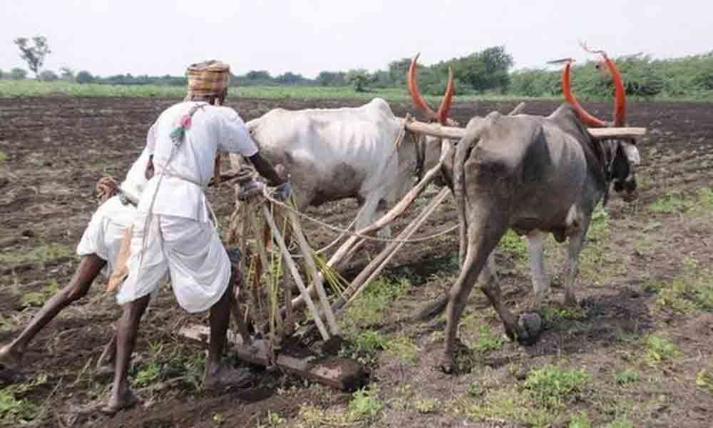 Farmers seek crop loan waiver at one go
