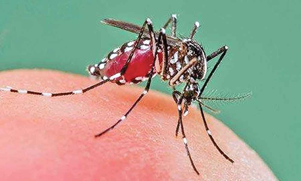 Dengue burns hole in patients pockets
