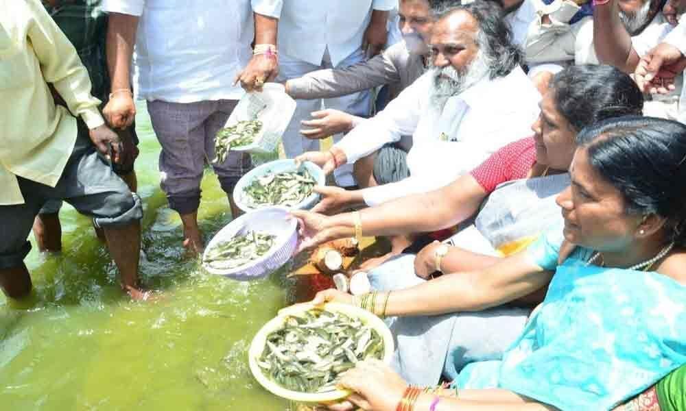 1.6 lakh fishlings released in Mehboob Sagar lake