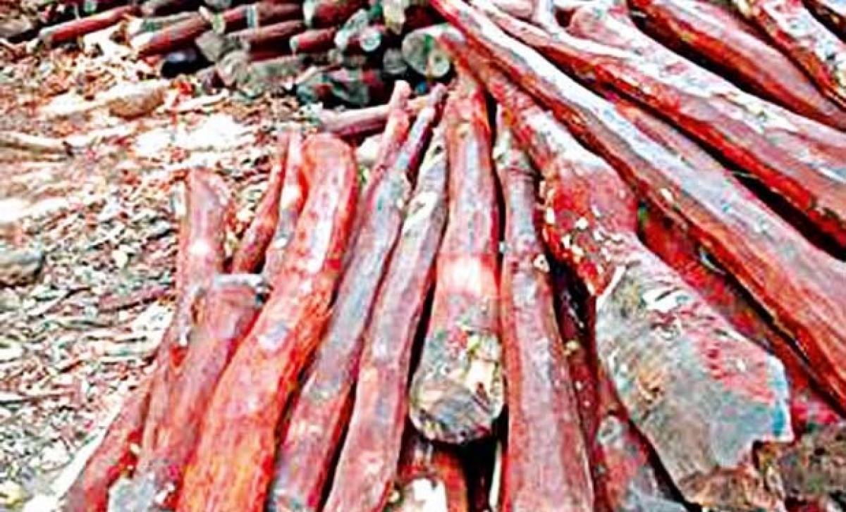 25 red sanders logs seized 5 held