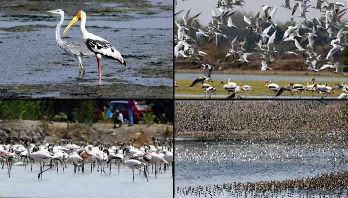 The annual Asian Waterbird Count between from January 9