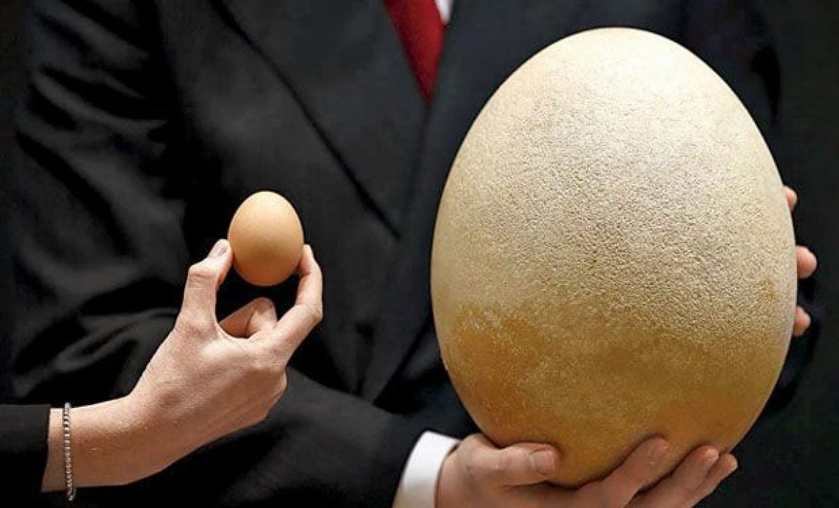 231 dinosaur eggs seized from home in China