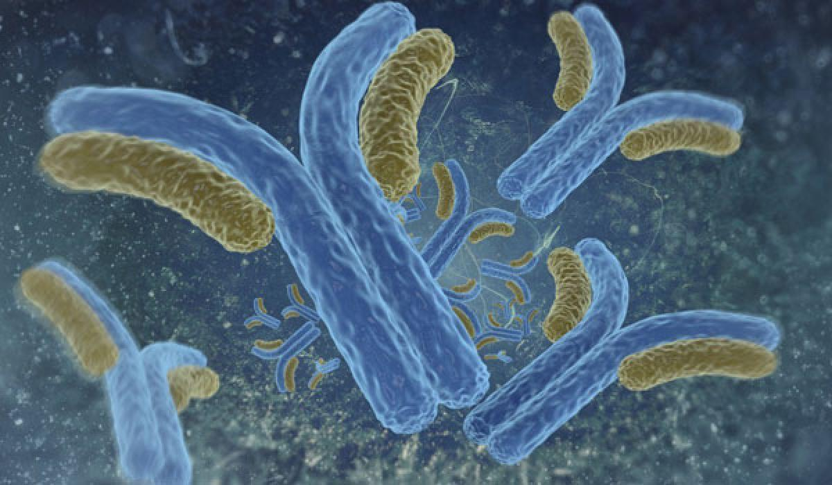 Human antibodies to fight ebola viruses discovered