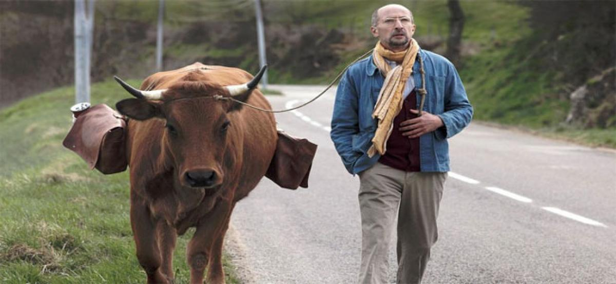 """ The Cow "" New French Comedy"