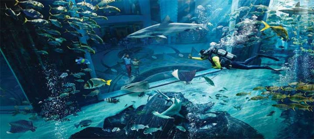10 must-do activities for families at Atlantis, The Palm