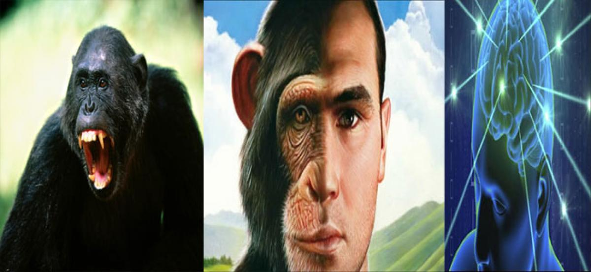 Human brain is 3 times larger than chimps