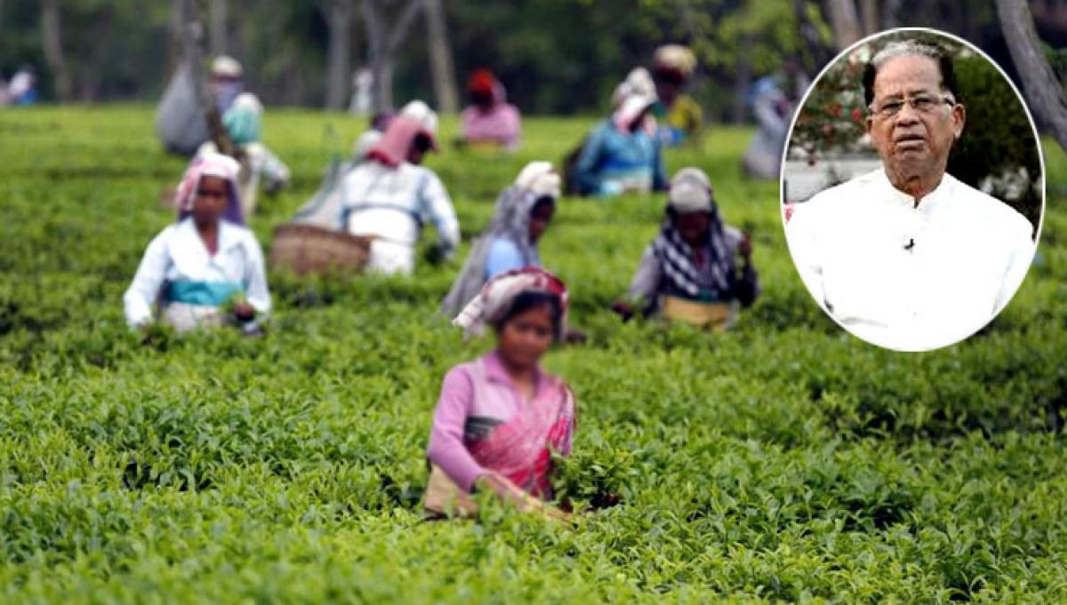 Assam tea workers may get 20 pc puja bonus