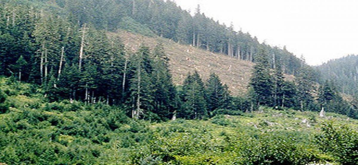 Telangana gets environmental clearance for using forest land in project
