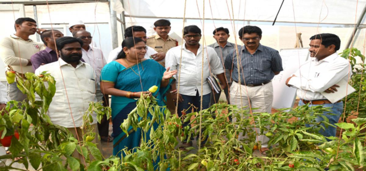 Horticulture officials told to conduct training programmes for farmers
