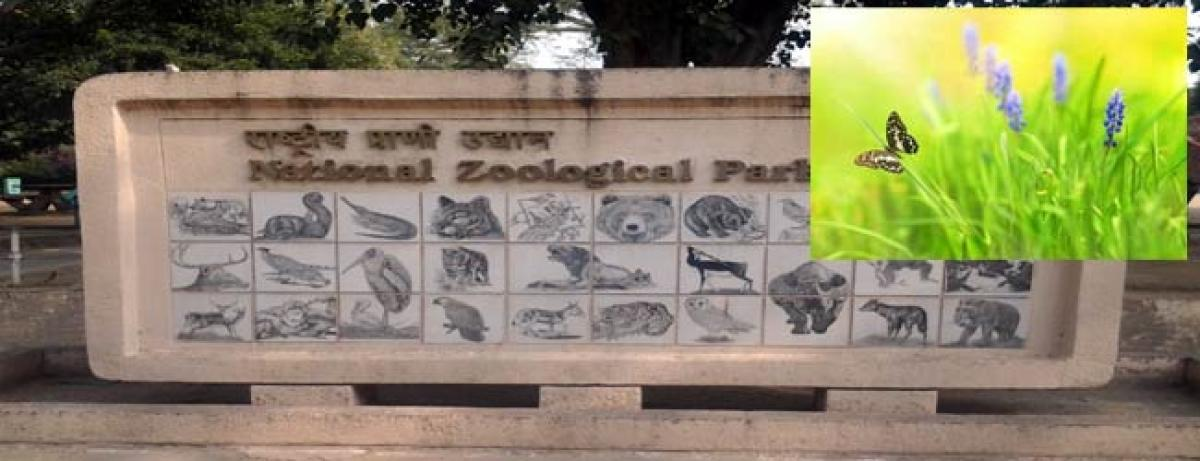 Butterfly park, exotic trees in Delhi Zoo on cards