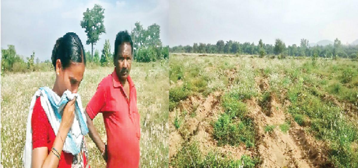 Haritha Haram leaves tribals landless