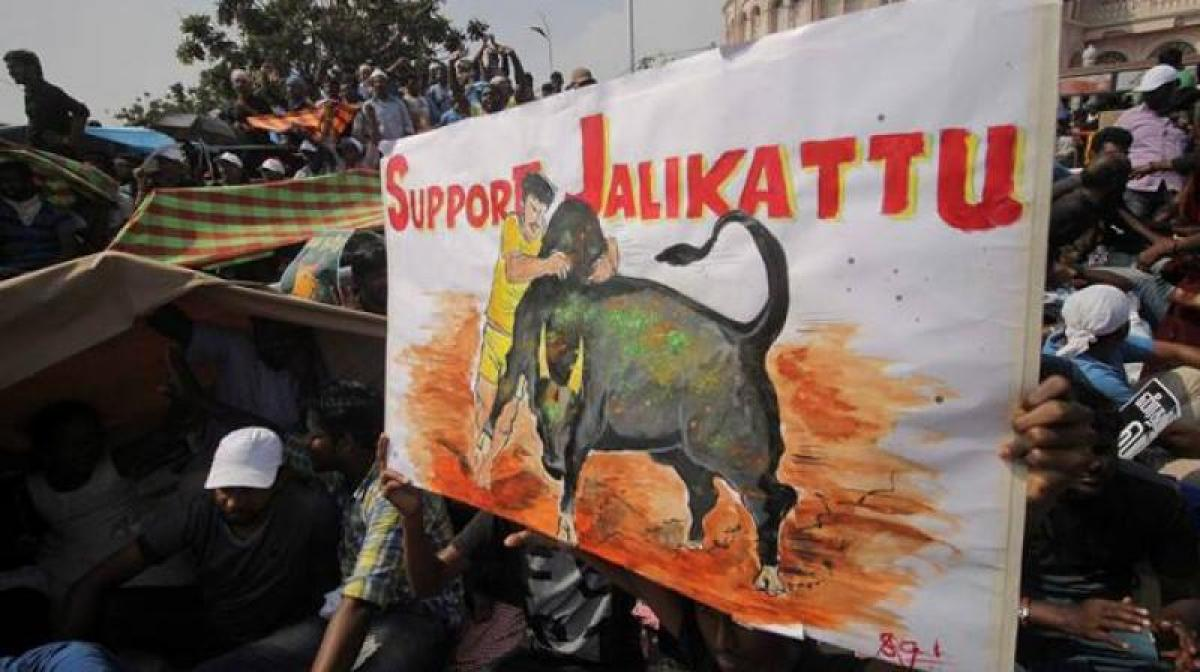 Tamil-Americans hold rally in support of Jallikattu