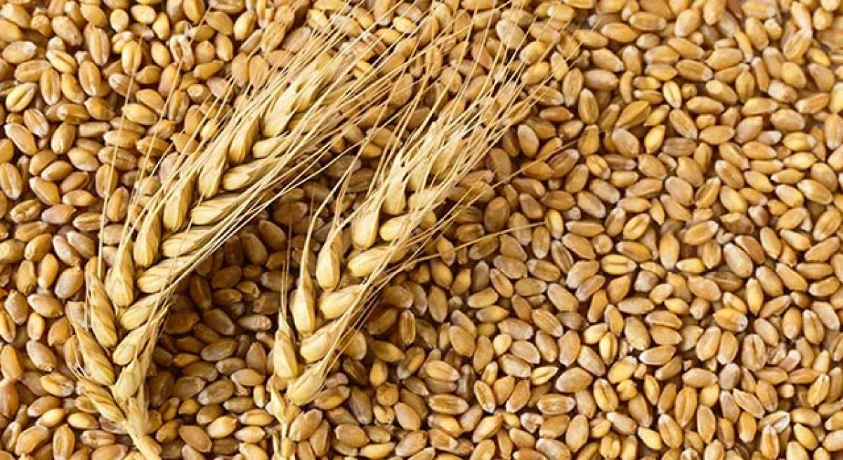 Wheat protein can worsen chronic health conditions