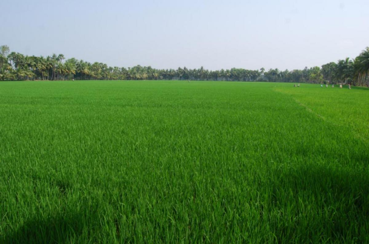 Water scarcity stares at paddy farmers in delta