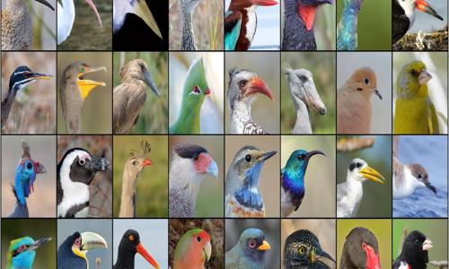 How bird beaks evolved over time decoded