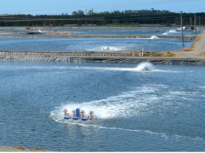 Aqua farmers levels 'cold' feet