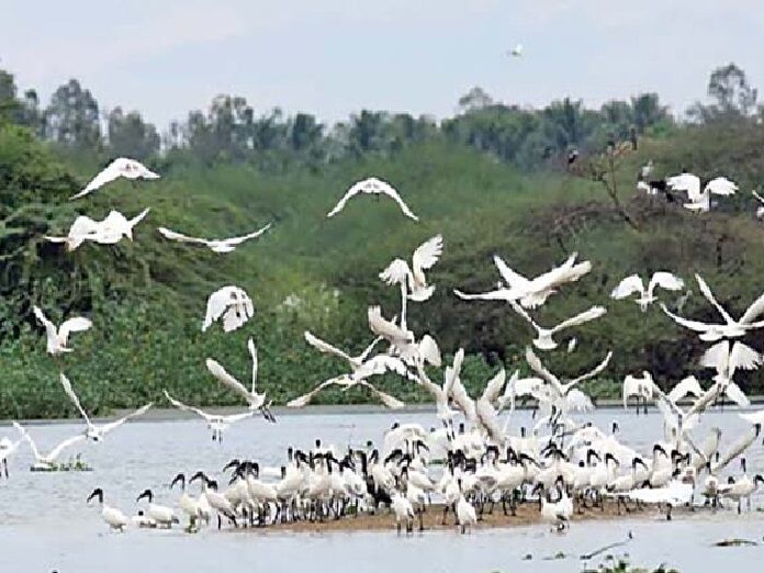 Vaduvoor: A tiny village luring and feeding global birds
