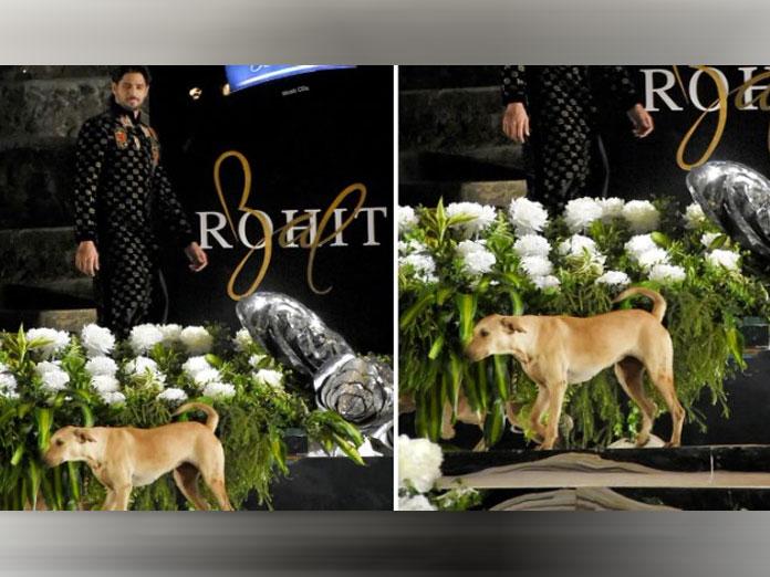 Stray Dog Shares The Ramp With Sidharth Malhotra