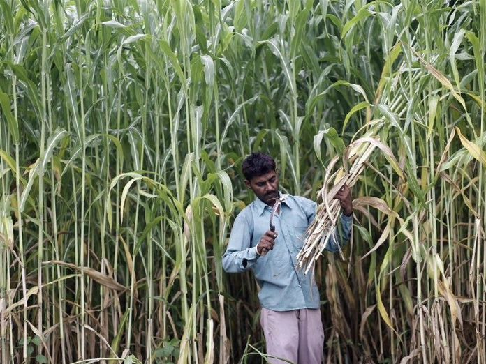 No place for cane growers in farm package