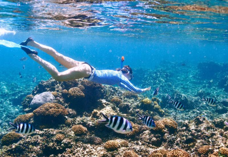 Sunscreen, cosmetics may harm coral reefs: Study