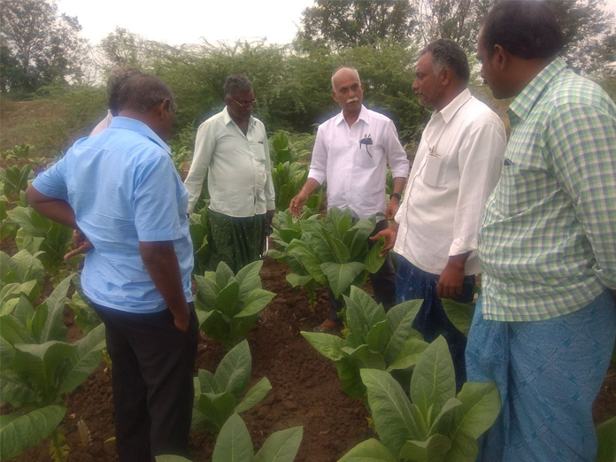 Tobacco Board gives suggestions to growers