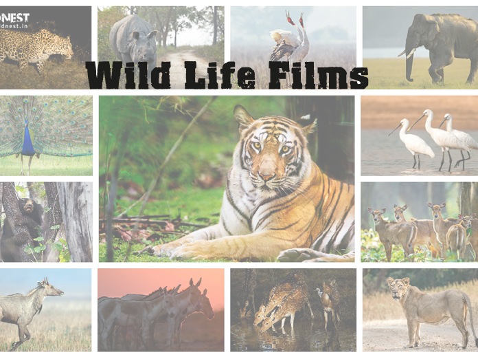 BMC, Discovery tie up to air wildlife films at zoo theatre