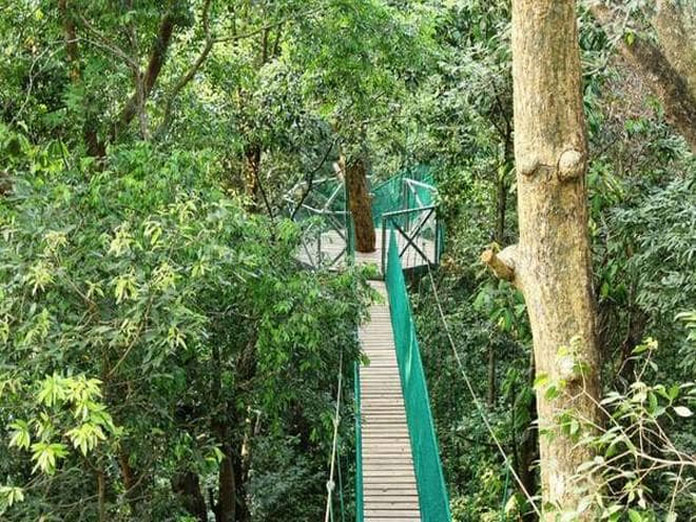 Tussle between villagers and forest department shuts down Indias canopy walk