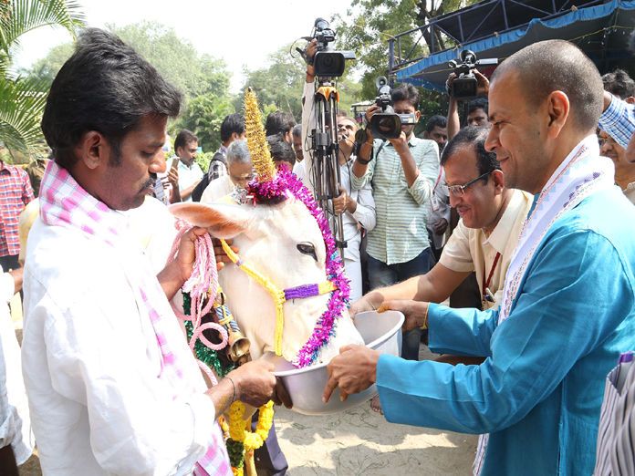 TTD aims at developing cow breeds